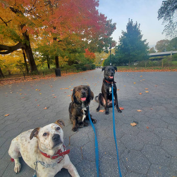 Pups loving the Fall weather!