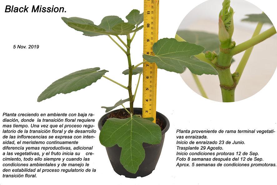 fructificación_bajo_baja_radiacion.jpg