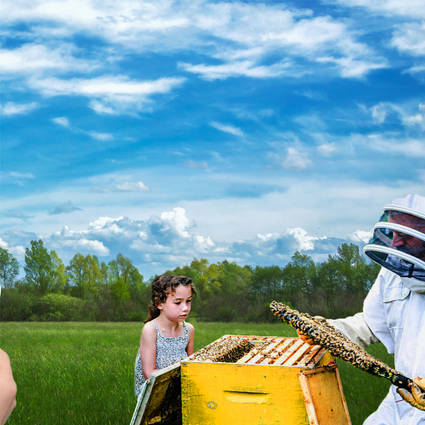 Rencontre avec l'apiculteur