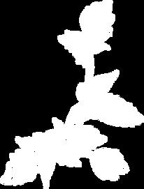 blanche élément.png