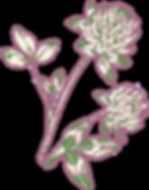 trefle élément_edited.png