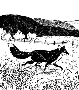 charlotte dessin Dubbel fleurs de sureau