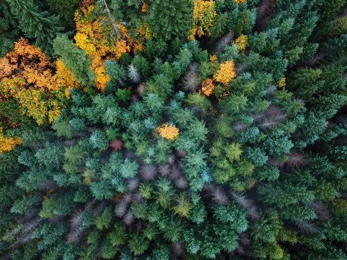 Aerial autumn
