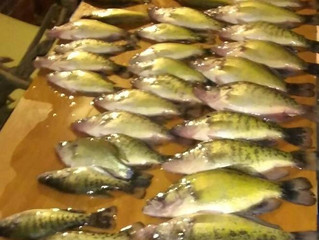 Crappie and Catfish