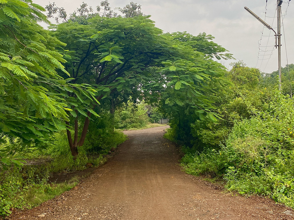 Foliage forming a tunnel on the path leading to Mandali Hall