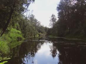 Point & Shoot | Bunya Crossing Reserve