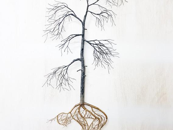 Root of wisdom 2