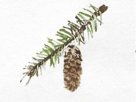 pine ed. 2/4