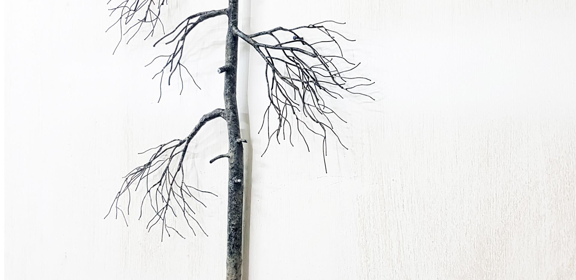 Root of wisdom-2