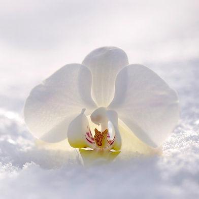 orchid-2952074_1920 (2).jpg
