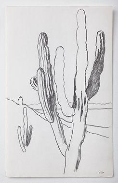 Cacti near La Paz Mexico 2  october 1989