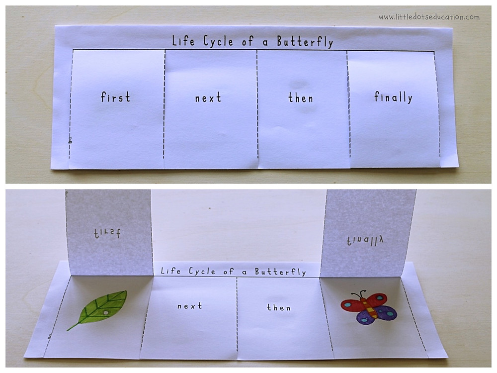 Free life cycle of a butterfly sequencing printable