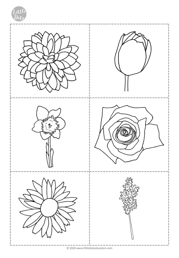 Free preschool flower theme flashcards