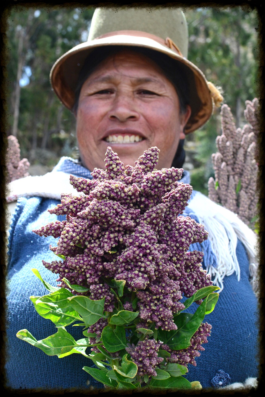 Doña Victoria's Quinoa Harvest