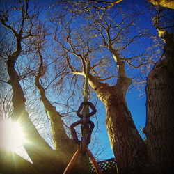 Tree Services Christchurch