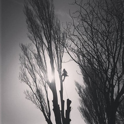 Removing a tree in Christchurch City
