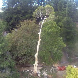 Large tree removal experts!