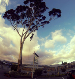 Tree Pruning in Christchurch