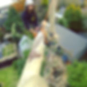 Christchurch tree removal by our canterbury tree removal expert