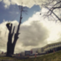 best price tree removal service in christchurch