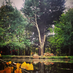 Christchurch Tree services