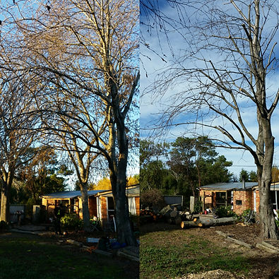 Tree trimming and tree pruning throughout christchurch
