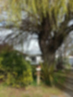 Christchurch tree pruning and tree services by qualified arborists