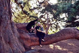 Christchurch tree services by qualified arborists