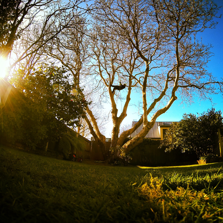 Christchurch Arborist