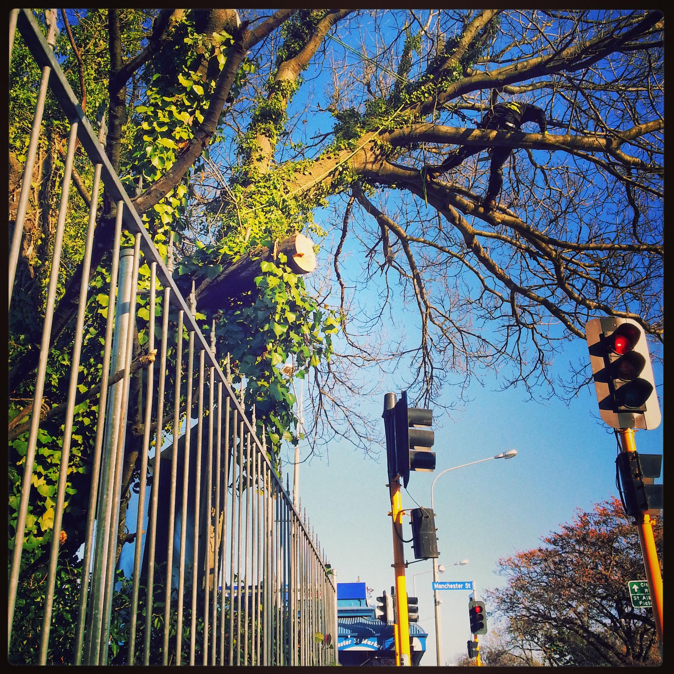 Arborist Christchurch