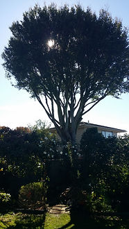 Our qualified arborists are tree pruning specialists