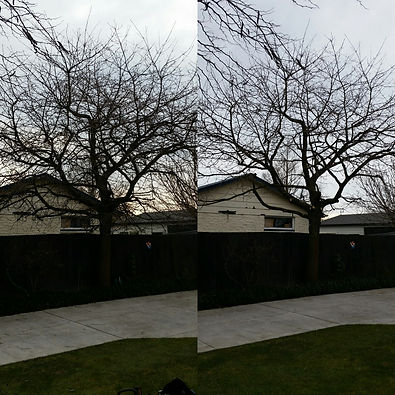 Christchurch tree pruning services by a qualified arborist