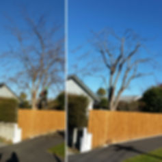 Tree Services in Christchurch