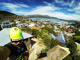 Tree removal specialists throughout canterbury offering the best priced tree removal