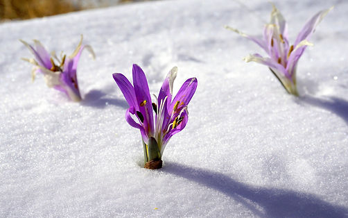 winter-flowers-1200013_1920.jpg