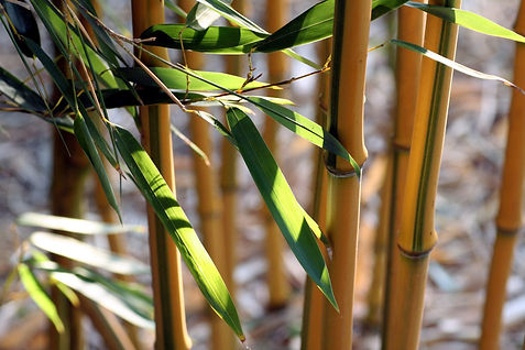 bamboo-3610149_1920.jpg