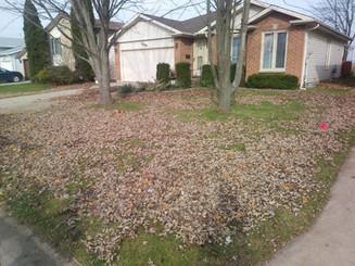 Leaf Clean Up 1 Before