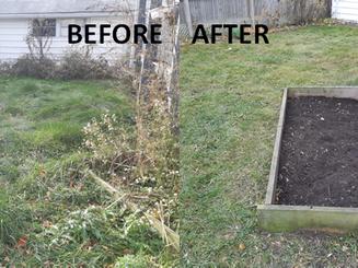 237 Cobden Back Yard before & after.png