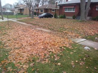 Leaf Clean Up 2 Before