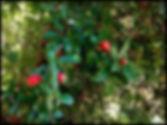 fruits Andalucia