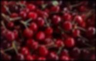 cherry basket Sierra Nevada Spain