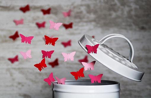 butterfly-4061336_1920.jpg