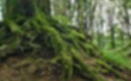 root-276636_1920_klein.jpg