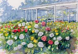 大船植物園のバラs