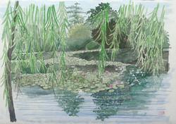 028_モネの池3_フランス