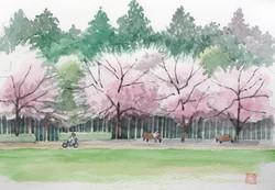 040_諏訪野原公園の桜(神奈川・小田原市)-2018/水彩F3
