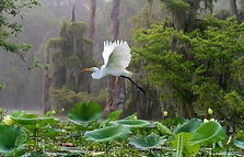 Flying crane with pond.jpg