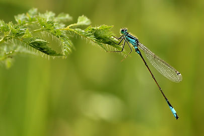 dragonfly-4293710_1920.jpg