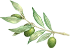 olive%20branch_edited.png