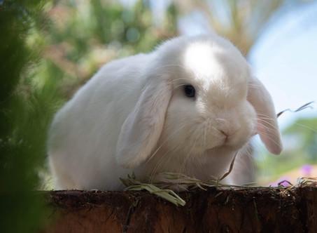 בחרתם לגדל ארנב - זה הדבר הראשון שאתם צרכים לדעת